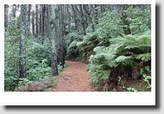 Local walks; Katikati's Haiku Pathway and Papamoa Hills Regional Park