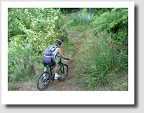 Oropi Grove Mountain Bike Trails